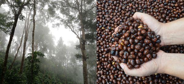 Abbu Coffee