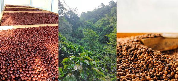 Corpachi Coffee Company